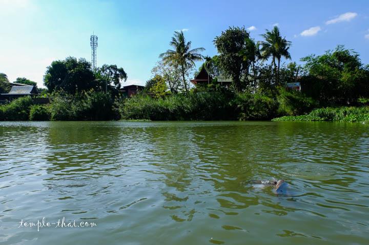 La rivière Lopburi et ses poissons