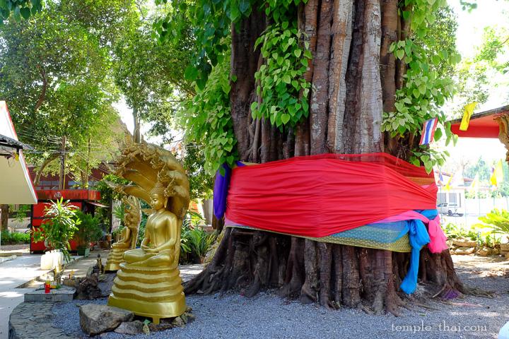 L'immense Arbre de la Bodhi