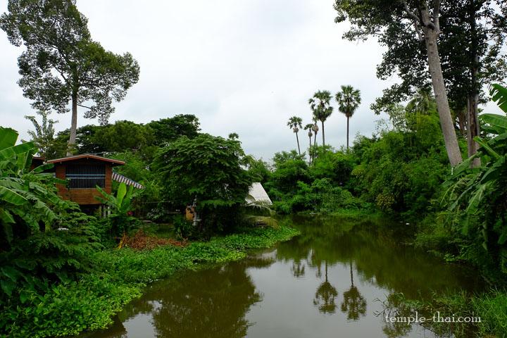 Un canal et la végétation