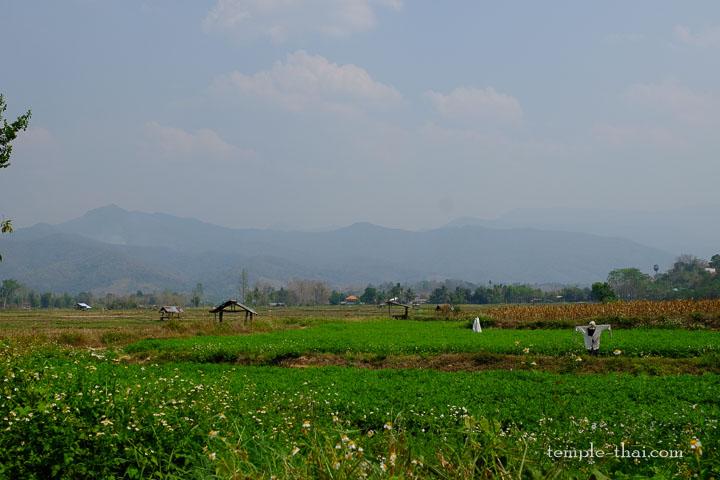 Les champs et rizières vus depuis le temple
