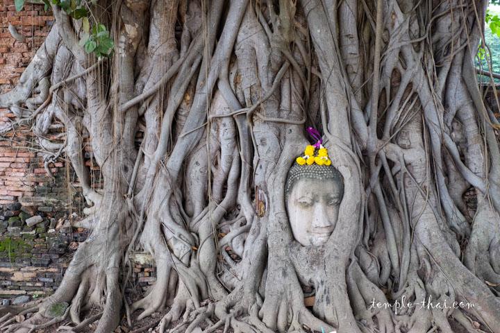 Le bouddha iconique du Parc historique d'Ayutthaya
