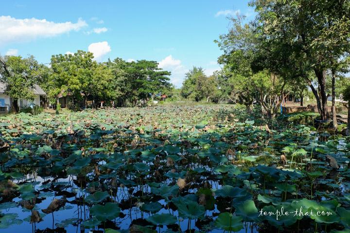 Baray peuplé de lotus