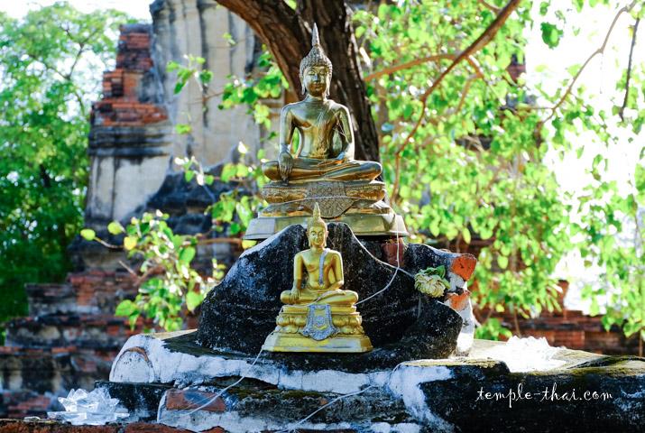Vestiges du bouddha des lieux