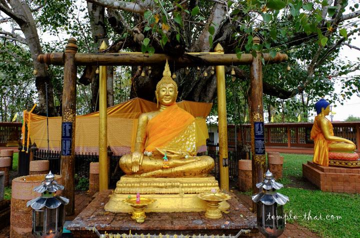 bouddha au pied de l'arbre de la Bodhi