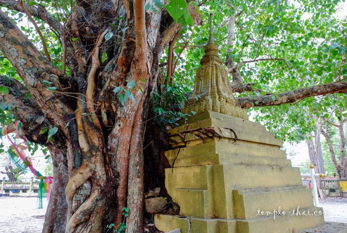 arbre et stupa ne font plus qu'un